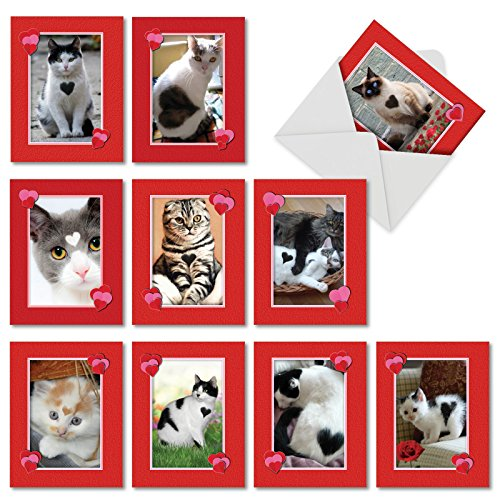 10 Heartfelt Cats Note Cards with Envelopes (4 x 5.12 Inch) - Assortment of Blank Cards for Valentine's Day, Cat Lovers, All Occasion Stationery - Adorable, Cute Boxed Notecard Set M5658OCB-B1x10   ]()