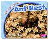 Look Inside an Ant Nest (Look Inside Animal Homes)