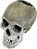 Blue Ribbon Exotic Environments Life-Like Human Skull