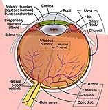 Premium Lutein Vision Support Supplement