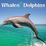 2019 Whales & Dolphins Wall Calendar by