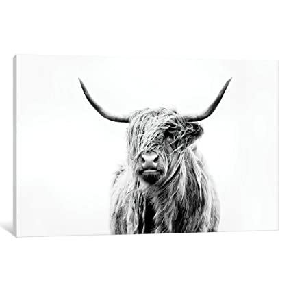 b76edc74921 Amazon.com  iCanvasART DFU4-1PC3-40x26 Portrait of A Highland Cow ...