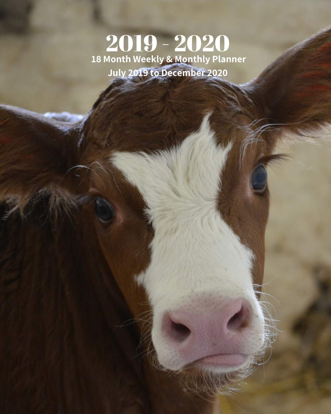 Cow Calendar December 2020 Amazon.com: 2019   2020 | 18 Month Weekly & Monthly Planner July