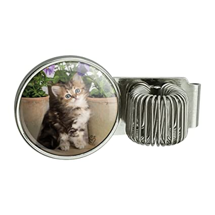 Ragdoll Tiffany - Agenda para gatos, diseño de gato, con ...