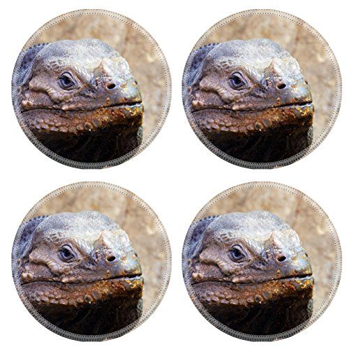 Liili Round Coasters Closeup Of A Lizard Photo 511809