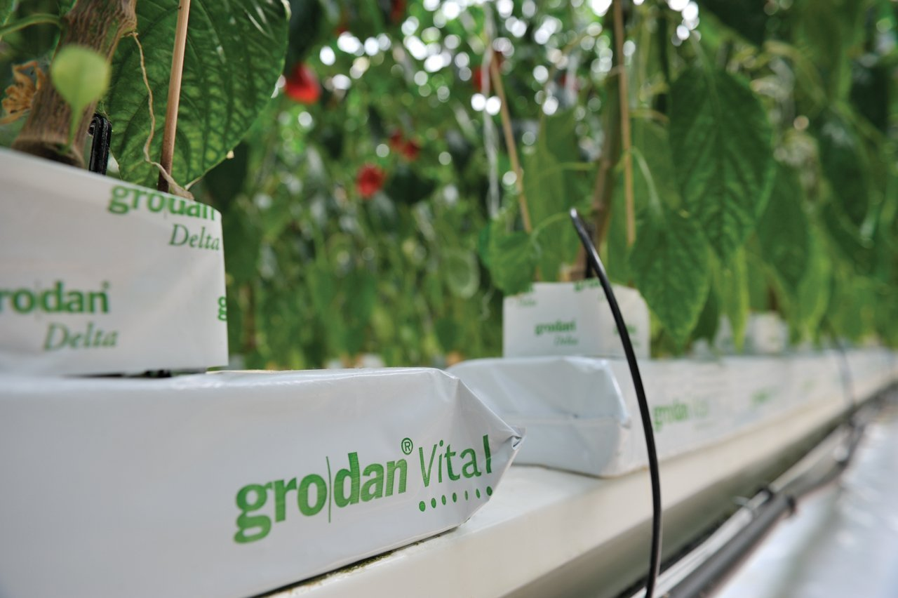 12 Grodan Vital Professional Rockwool slabs (L) 120cm x (W) 15cm x (D) 7cm Greenhouse or Indoor / Outdoor Hydroponics (12)