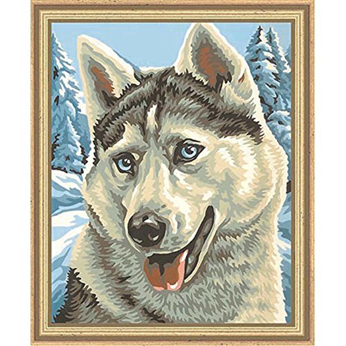 Schipper 9240 393 - Painting by Number, Husky, 24x30 cm by Reulein
