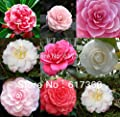 Wholesale - -400 MIXED DOUBLE CAMELLIA IMPATIENS Balsamina Flower Seeds 8 colors SKU30*4