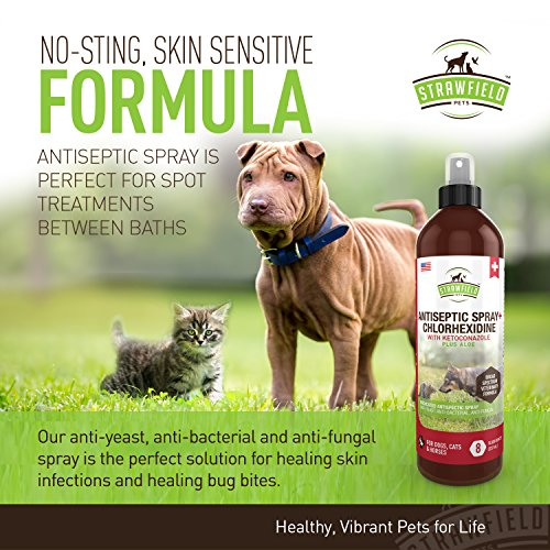 Chlorhexidine Spray for Dogs + Cats, Ketoconazole + Aloe - 8 oz - Cat + Dog Hot Spot Treatment, Mange, Ringworm, Yeast Infection, Itching Skin Relief, Allergy Itch, Acne, Antibacterial Antifungal, USA
