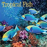 Tropical Fish 2019 12 x 12 Inch Monthly Square Wall Calendar with Foil Stamped Cover, Animals Marine Wildlife Fish (Multilingual Edition)