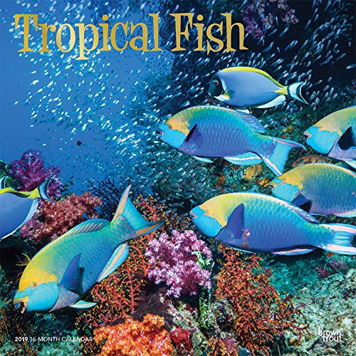 Tropical Fish 2019 12 x 12 Inch Monthly Square Wall Calendar with Foil Stamped Cover, Animals Marine Wildlife Fish