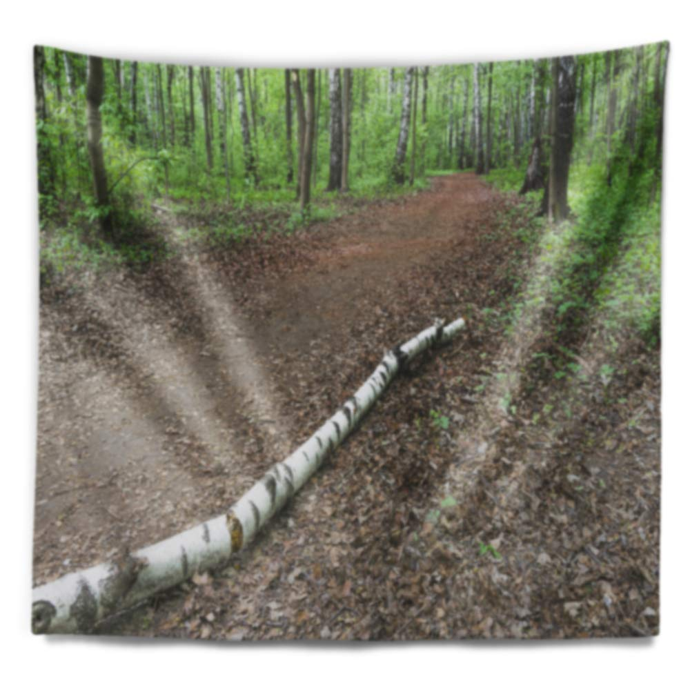 80 in x Large x 68 in. Designart TAP10972-80-68 Trunk of Birch on The Track Contemporary Landscape Tapestry Blanket D/écor Wall Art for Home and Office