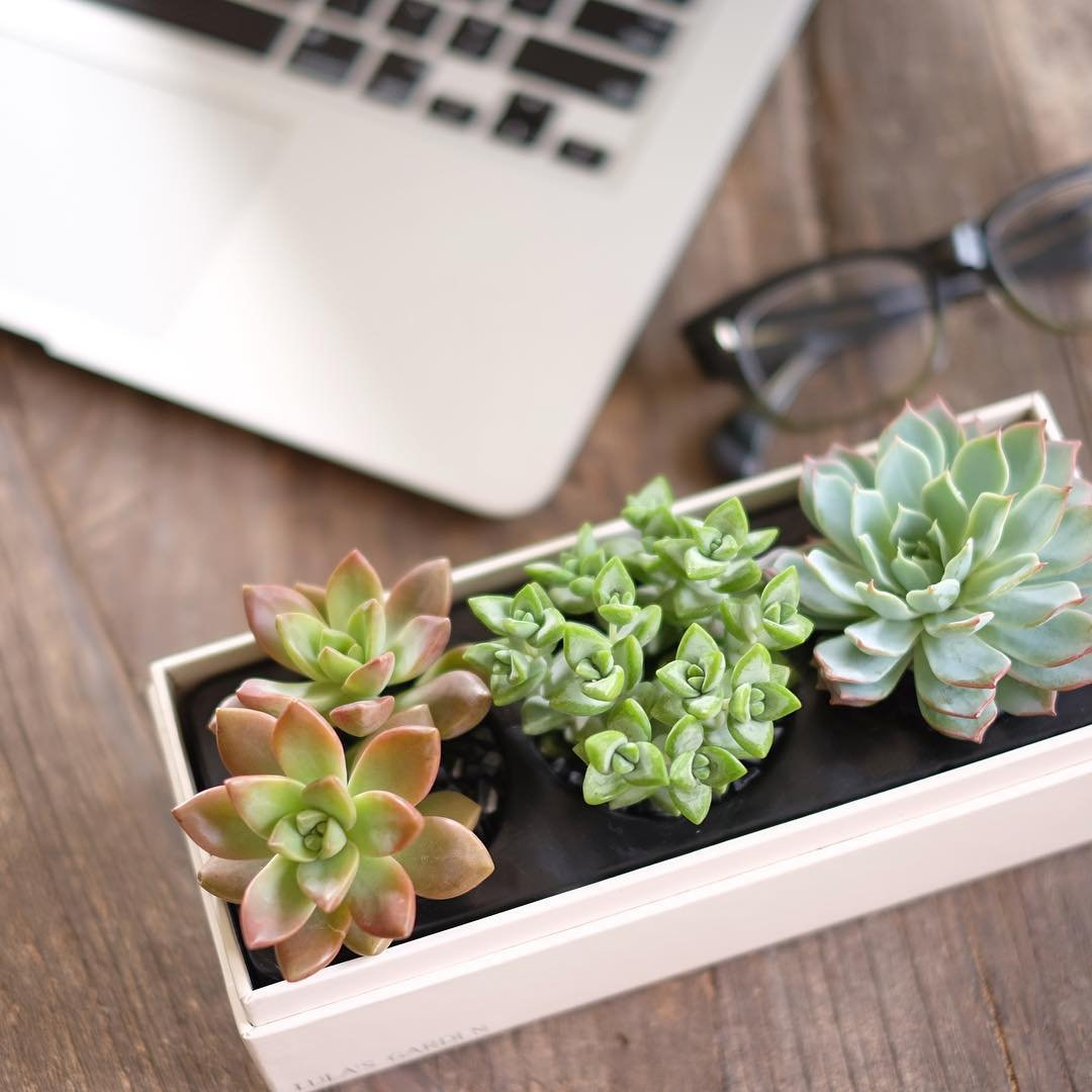 Live Succulent Plant - Garden Centerpiece with I Love You Gift Box - Perfect and Unique Gift for Wife, Mom, Friend, Co-Workers, Boss or Teacher (Jewel Garden, I Love You) by Lula's Garden (Image #2)