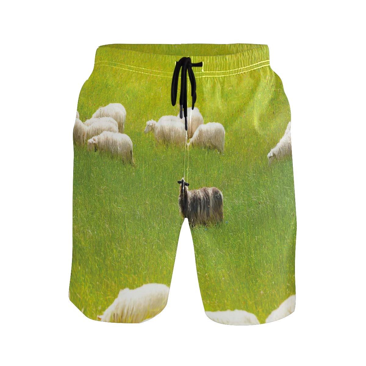 KVMV Black Sheep Between White Goats On Grass Field Meadow A Quick Dry Beach Shorts