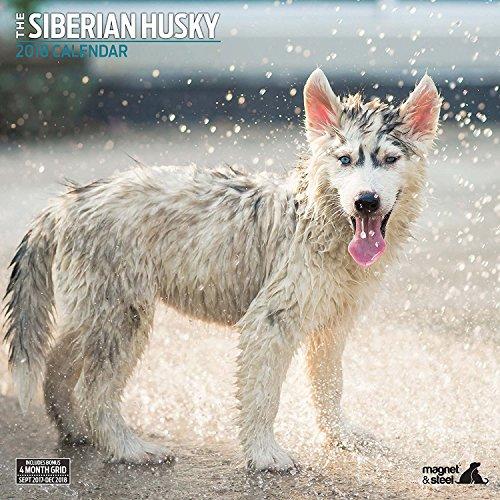 Siberian Husky 2018 Traditional Wall Calendar