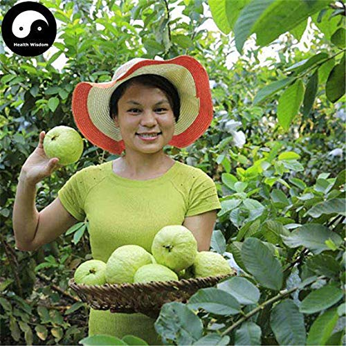 60pcs: Buy Real Guava Fruit Tree Seeds Plant Fruit psidium guajava Grow Fan shi liu
