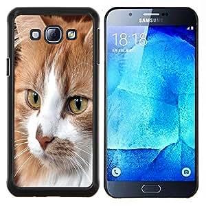 EJOOY---Cubierta de la caja de protección para la piel dura ** Samsung Galaxy A8 A8000 ** --Gato Cymric Americano de Pelo Corto Casa