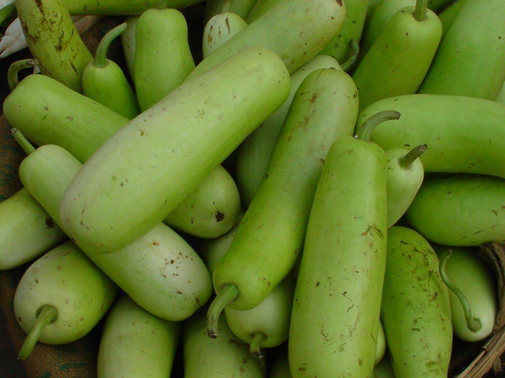 Stonysoil Seed Company Asian Heirloom Bottle Gourd Seeds (NAM Tao Yo)