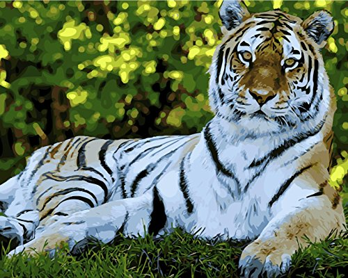 TianMai New Paint by Number Kits - White Tiger 16x20 inch Linen Canvas Paintworks - Digital Oil Painting Canvas Kits for Adults Children Kids Decorations Gifts (No Frame)