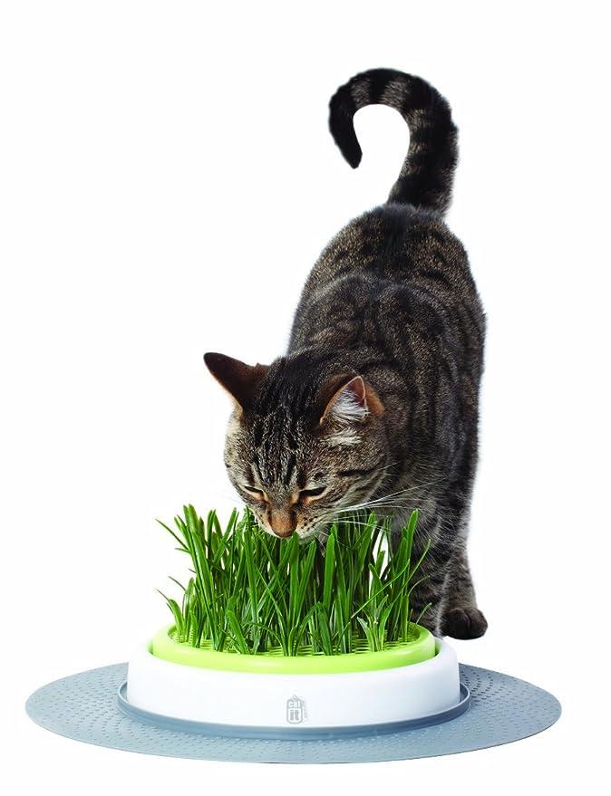 Catit Design Senses - Juego de Hierba para Gatos: Amazon.es: Productos para mascotas