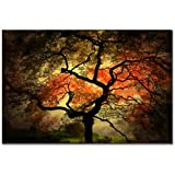 Trademark Fine Art Japanese I by Philippe Sainte-Laudy Canvas Wall Art, 16x24-Inch