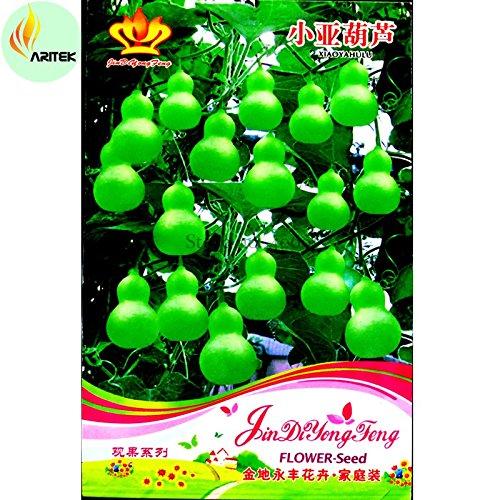 TopOne Sales Heirloom 'Jindi' Small Ornamental Gourd Seed...