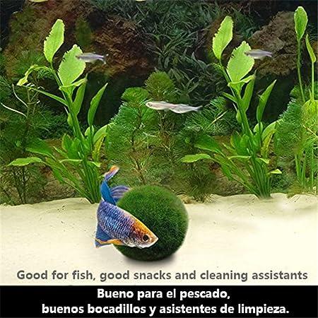 angju - [Bolas de musgo] para acuario para plantas vivas, bola de musgo ecológica, adorno para pecera: Amazon.es: Productos para mascotas