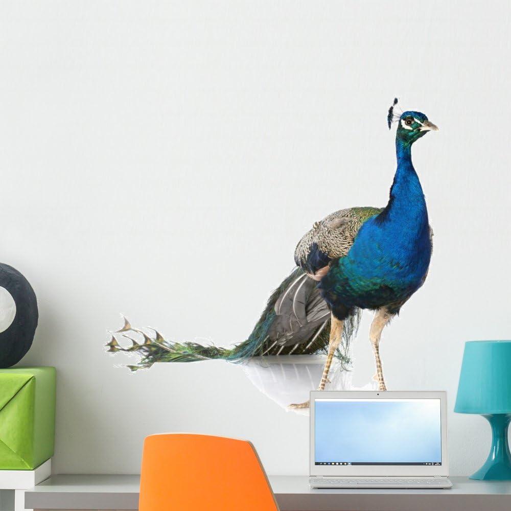 3D Decals Design Peacock Wall Stickers Crystal Acrylic 60cmx50cm Decor Green