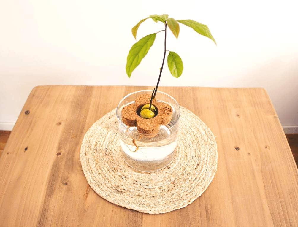 semilla de aguacate