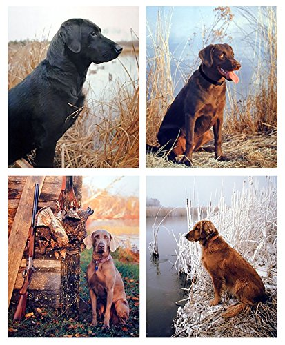 Black Labrador Dog Hunting Animal Picture Set of Four 16x20 Wall Decor Art Print ()