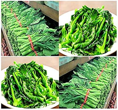 Green Leaf ® 250 x Chinese Broccoli, Kailan Gai Lan Seeds - Most Popular vegetable in Cantonese Cuisine - Approx. 60 - 65 Days - By MySeeds.Co