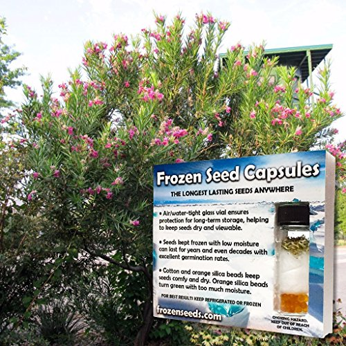 (Desert Willow Seeds (Chilopsis linearis) 10+ Rare Medicinal Herb Seeds + FREE Bonus 6 Variety Seed Pk - a $29.95 Value! Packed in FROZEN SEED CAPSULES for Growing Seeds Now or Saving Seeds for Years)