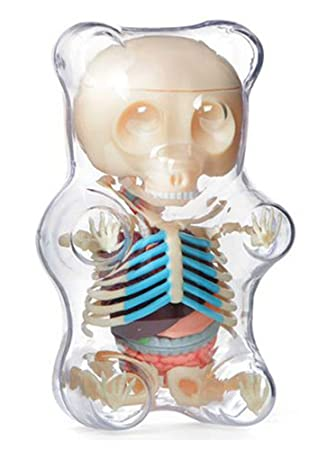Amazon 4d Vision Animal Anatomy Gummi Bear Skeleton Anatomy