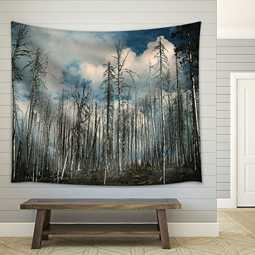 Landscape Aspen Trees in Fair Weather Fabric Wall