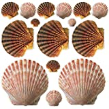 Sea Shell Stickers Beach Wall Decals Removable Wall Art