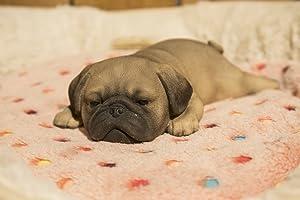 Hi- Line Gift 87710-L Pug Puppy Sleeping Pet Pals Statue
