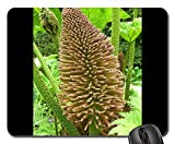 Mouse Pads - Mammoth Sheet Gunnera Manicata Blossom Bloom