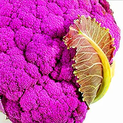 Youandmes 20pcs Organic Purple Cauliflower Seeds Broccoli Seeds Vegetable Seeds Heirloom Non-GMO for Home Garden Planting : Garden & Outdoor