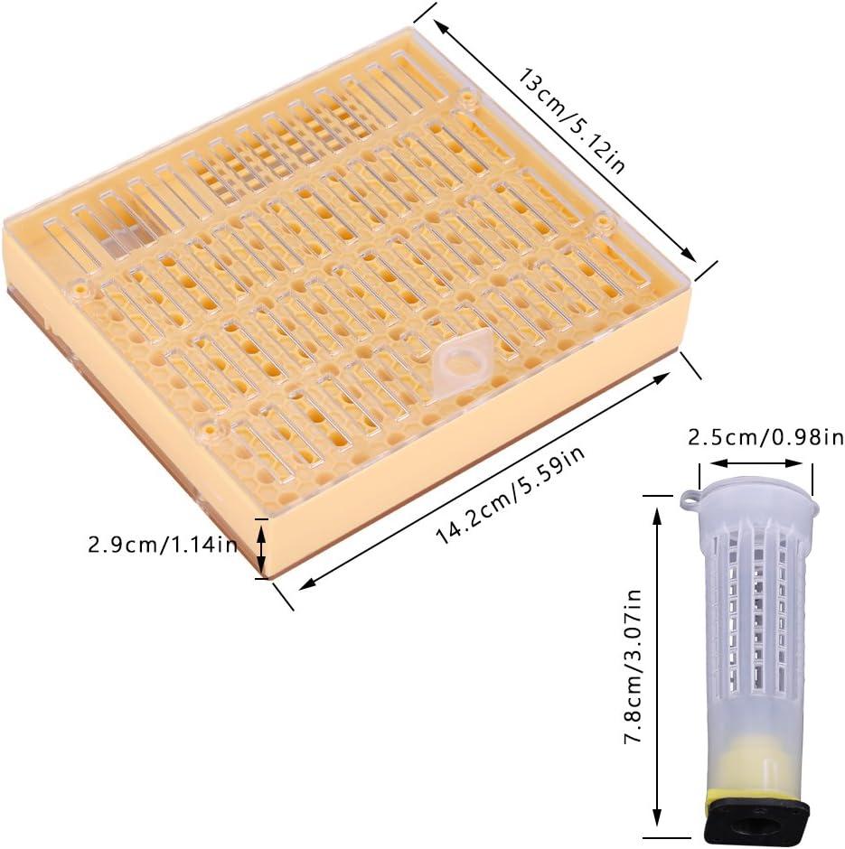 Wifehelper K/önigin Aufzucht Cup Kit Bee Anbau-Tool Kunststoff Bienenzucht Box Cage Set Gartenterrasse liefert