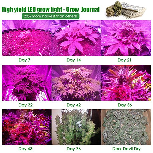 LED grow light full spectrum for indoor plants veg and flower dimmable COB 12-band UV&IR MaxBloom high yield 800W X8 Plus professional led grow light for marijuana over 9 years by MaxBloom (Image #2)