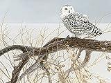 Cobble Hill Fallen Willow Snowy Owl by Artist Robert Bateman500 Piece Birds 500 Piece Jigsaw Puzzle