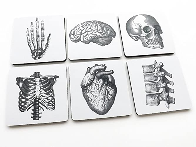 Amazon Square Anatomy Coasters 35 Inch Mousepad Rubber