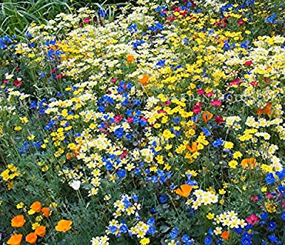 California Native Mixed Wildflowers - 13 Choice Varieties of California Natives .2 Oz.