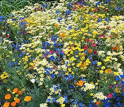 California Native Mixed Wildflowers - 13 Choice Varieties of California Natives .2 Oz.