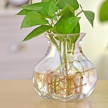 florero vidrio esférico/La pecera hidropónico florero de cristal/ florero floral simple y moderna