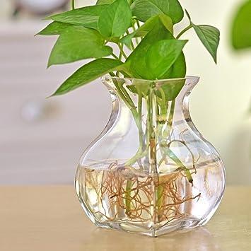 florero vidrio esférico/La pecera hidropónico florero de cristal/ florero floral simple y moderna-A: Amazon.es: Hogar