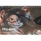 Hippos - Begegnungen in Afrika (Tischkalender 2018 DIN A5 quer): Wundervolle Hippo-Bilder aus Afrika (Monatskalender, 14 Seiten ) (CALVENDO Tiere)