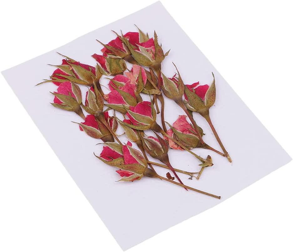 Gr/ün Sharplace 1 Set Bl/ütenbl/ätter Gepresste Blume Trockenblumen getrocknete Blumen Bl/ätter f/ür DIY