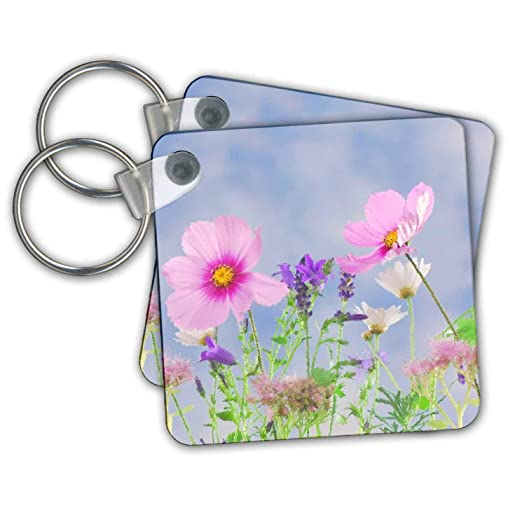 Amazon com: Stamp City - flowers - Photograph of wildflowers