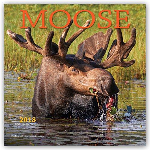Moose Calendar - 3